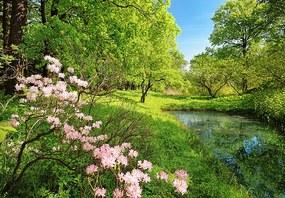 Fototapet Park in the Spring -  366x254 cm