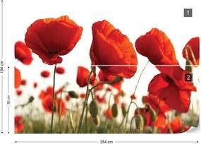 Fototapet GLIX - Red Poppies In The Field + adeziv GRATUIT Tapet nețesute - 254x184 cm