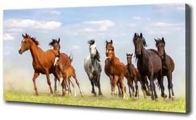 Tablou pe pânză Galopantă cai