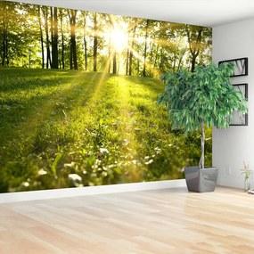 Fototapet Forest Sun.