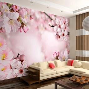 Fototapet Bimago - Spring Cherry Blossom + Adeziv gratuit 250x175 cm