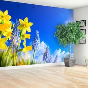 Fototapet Albastru Daffodil
