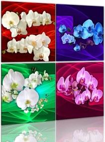 Tablou Bimago - Colorful Orchids 40x40 cm,