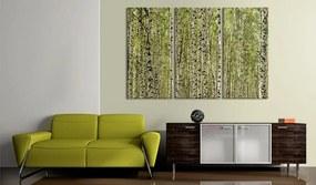 Bimago Tablou - A Forest Of Birch Trees 60x40 cm
