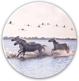 Styler Tablou pe sticlă - Horses | Dimensiuni: 70x70 cm