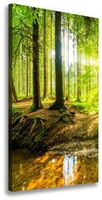 Tablou canvas Soare în pădure