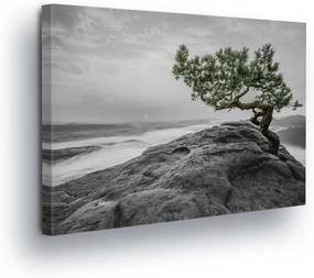 GLIX Tablou - Tree on the Reef in Gray 100x75 cm