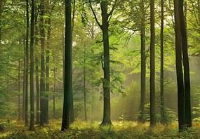 Fototapet Autumn Forest -  366x254 cm
