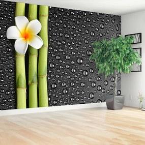 Fototapet frangipani flori