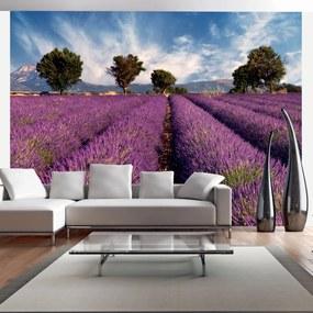 Fototapet Bimago - Lavender field in Provence, France + Adeziv gratuit 400x309 cm