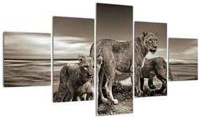 Tablou cu leii alb negri (125x70 cm), în 40 de alte dimensiuni noi