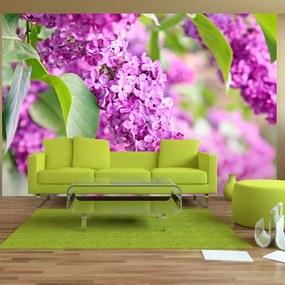 Fototapet Bimago - Lilac flowers + Adeziv gratuit 250x175 cm