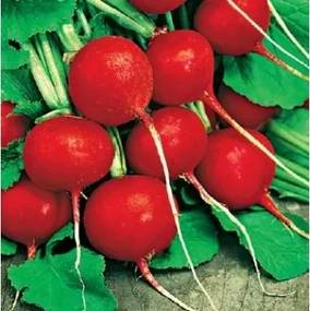 Seminte ridichi Cherry Belle(10.000 sem), Agrosel