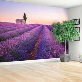 Fototapet Provence Lavandă