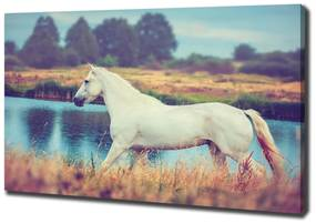 Imprimare tablou canvas White lake horse