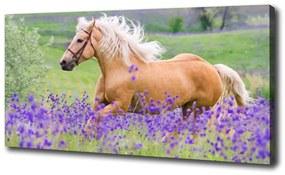 Pictură pe pânză Un cal într-un câmp de lavandă