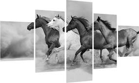 Tablou alb negru cu cai (K012065K12570)