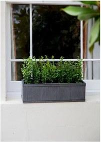 Ghiveci Garden Trading Vence Window, 60 x 18 cm