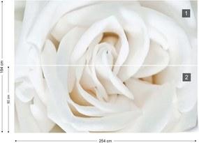 Fototapet GLIX - Soft White Rose + adeziv GRATUIT Tapet nețesute - 254x184 cm