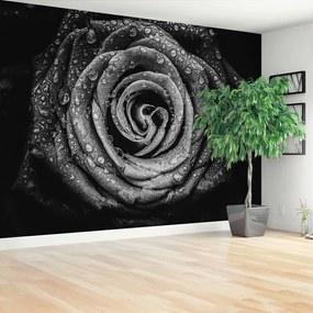 Fototapet Rose negru