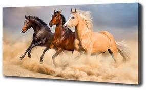 Tablouri tipărite pe pânză Galopantă cai