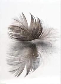 Styler Tablou pe sticlă - Wing 5 70x100 cm