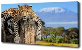 Imprimare tablou canvas Leopard pe un ciot de copac