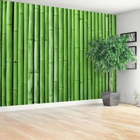Fototapet Bamboo Green