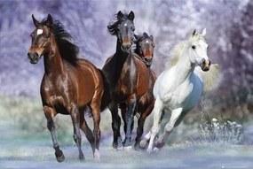 Running horses - bob langrish Poster, (91,5 x 61 cm)