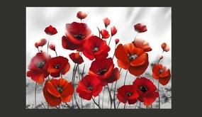 Fototapet Bimago - Poppies in the Moonlight + Adeziv gratuit 350x245 cm