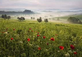 Imagine în cadru - Tuscan Spring by Daniel Řeřicha 40x30 cm
