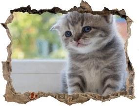 Fototapet 3D gaură în perete Pisica mica la fereastra