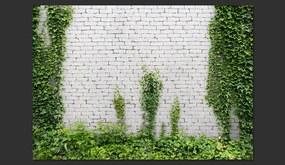 Bimago Fototapet - Creeping ivy 400x280 cm