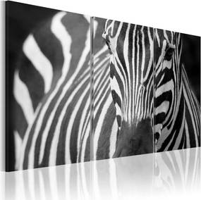 Bimago Tablou - Mrs. Zebra 60x40 cm