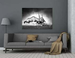 Tablou pe sticlă - Styler Gazelle 100x70 cm