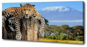 Print pe canvas Leopard pe un ciot de copac