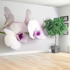 Fototapet alb Orhideele