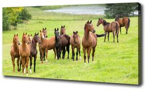 Tablou canvas Herghelie de cai în lunca