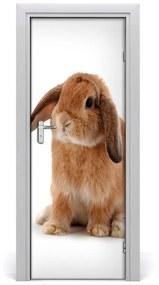 Autocolante pentru usi perete Rabbit