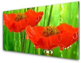 Tablou pe sticla Maci Floral Roșu Verde
