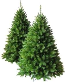 Brad Crăciun 'Oregon Pine', 150 cm