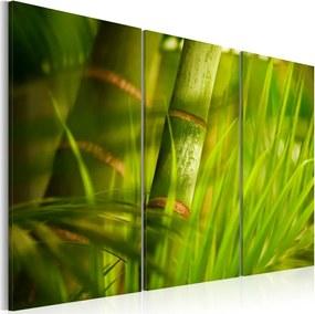 Bimago Tablou - Juicy Greenery 60x40 cm