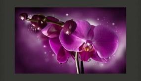 Bimago Fototapet - Fairy Tale And Orchid 450x270 cm
