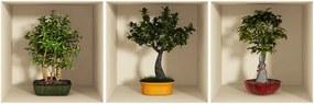Set 3 autocolante cu efect 3D Ambiance Bonsai Trees