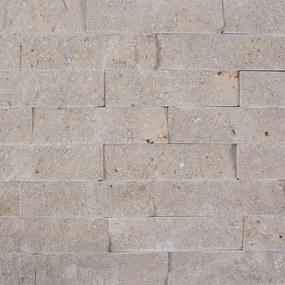 Limestone Astoria Scapitata 4 x 15 cm