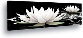 GLIX Tablou - Black and White Water Lily II 45x145 cm