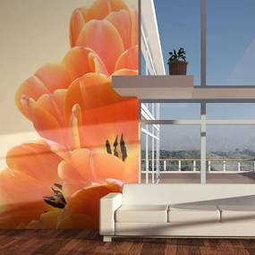Fototapet - Orange tulips 200x154 cm