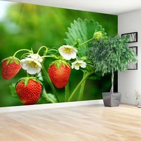 Fototapet Green Strawberry