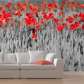 Fototapet Bimago - Red poppies on black and white background + Adeziv gratuit 200x154 cm