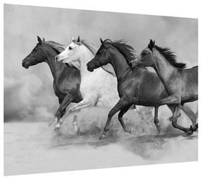 Tablou alb negru cu cai (K012065K7050)